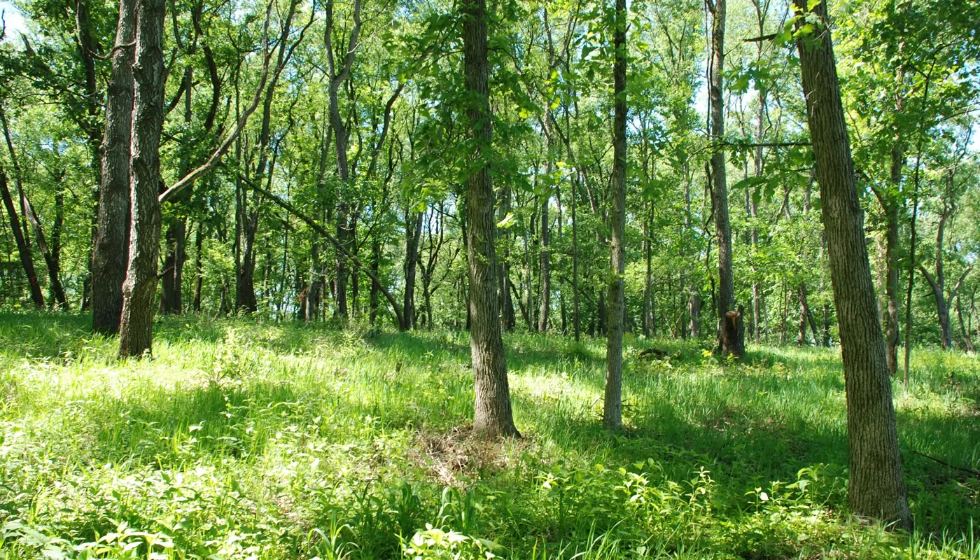 open woodland at McMahon Woods and Fen Nature Preserve