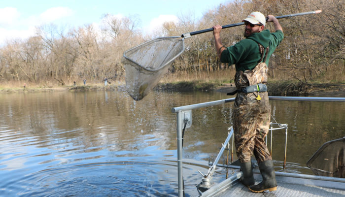 a Forest Preserves staff member with a fish in a net