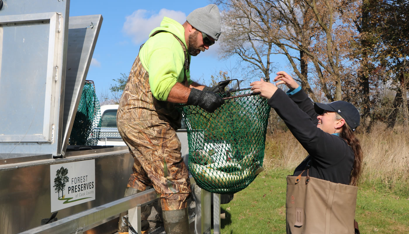 Forest Preserves staff members transferring fish into a trailer with a holding tank