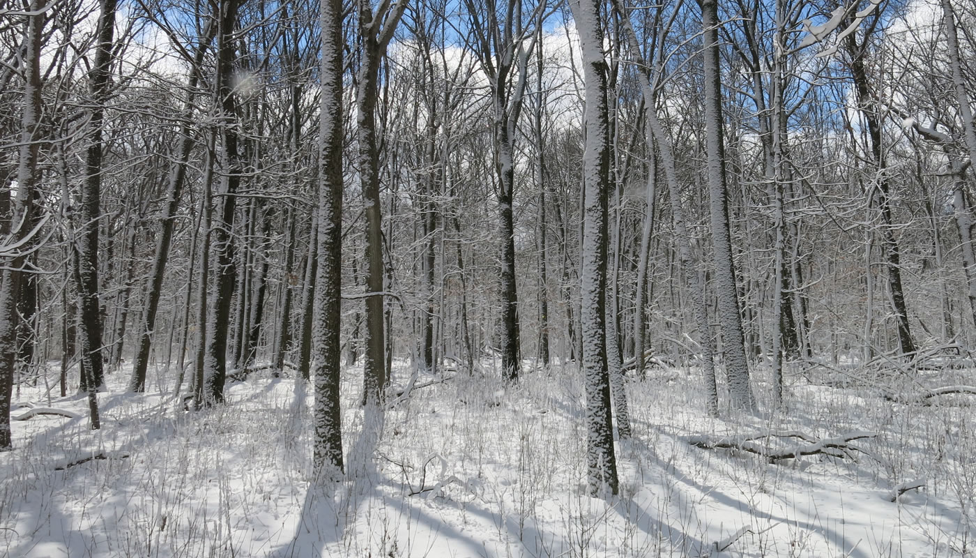 trees and ground covered with snow at River Trail Nature Center