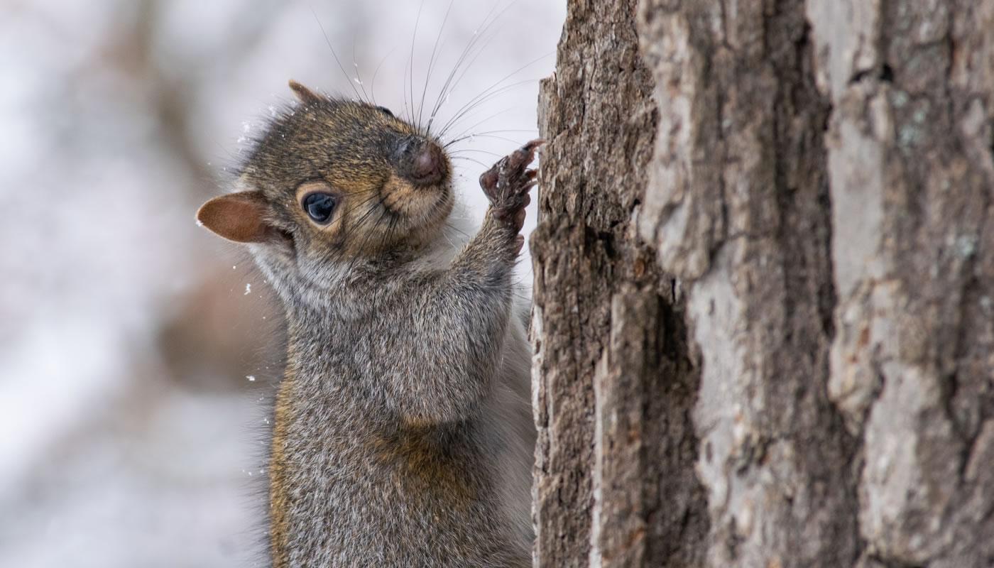 a squirrel climbing a tree trunk