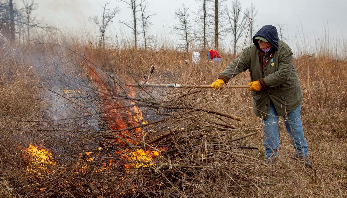 A volunteer throws brush onto a brush pile burn