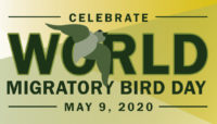 Celebrate World Migratory Bird Day on May 9, 2020