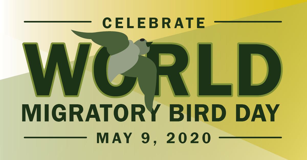 Celebrate World Migratory Bird Day on May 9, 2020
