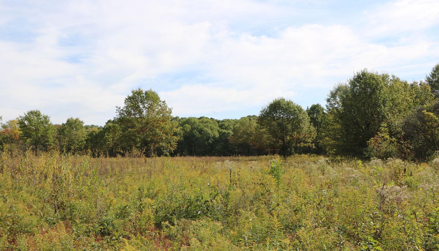 Prairie opening at Salt Creek Woods