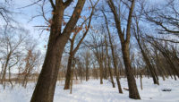 trees along the Black Oak Trail at Little Red Schoolhouse Nature Center during winter