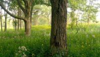 Somme Prairie Grove Nature Preserve
